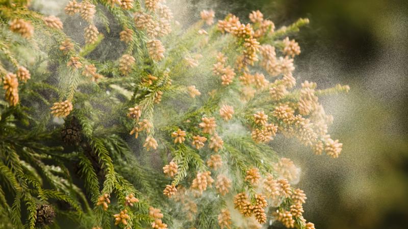 花粉時期の洗車頻度